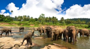 Ihr Urlaubsziel Sri Lanka